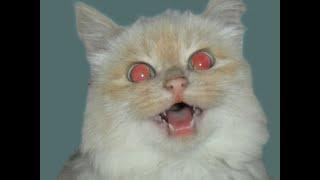 Удалить эффект красных глаз с помощью GIMP