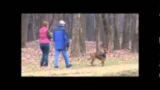 Kentuckiana K-9 Tracking Dog Training Compilation Video