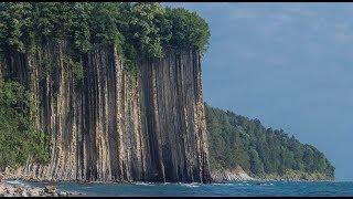 Уголь. Поваленные гигантские деревья