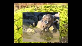 American Pika in Oregon - Discovering Wildlife Lecture Series