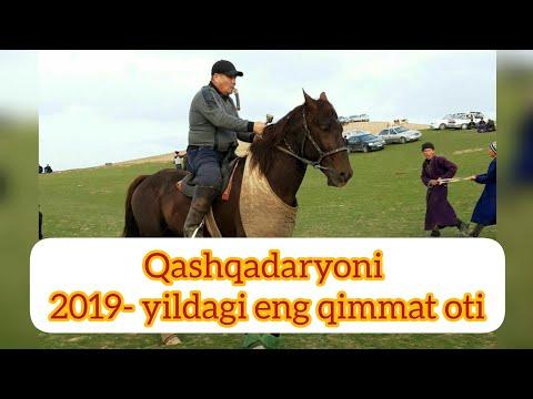 Qashqadaryoni 2019- Yildagi Eng Qimmat Otlari Siz Kutgan Video