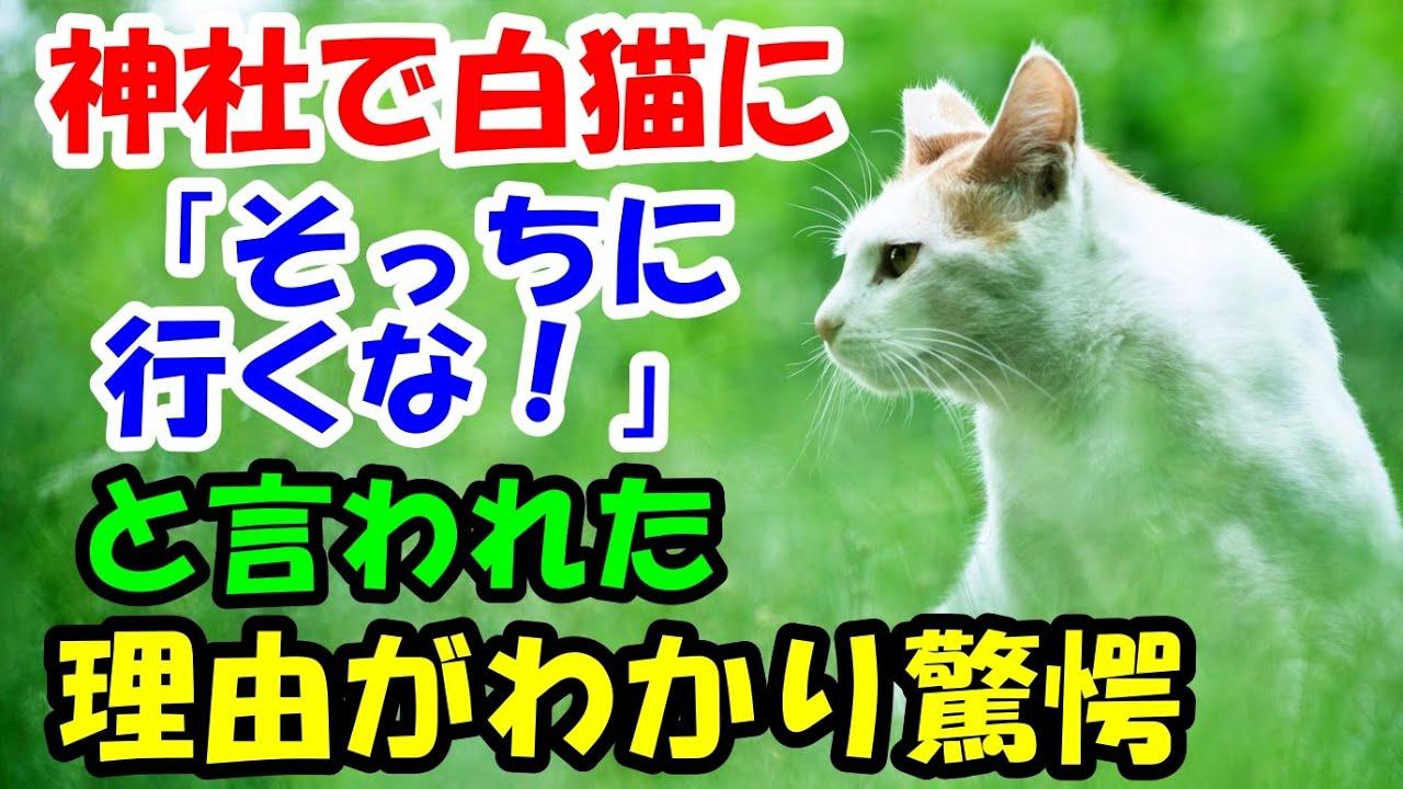 神社で出会った白猫に、「そっちに行っちゃダメ!」と引き留められた。後で理由が分かり驚愕【猫の不思議な話】【朗読】