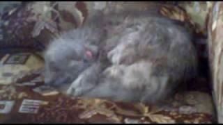 Кошка что-то лижит во сне=))))