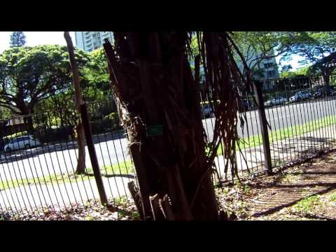 Foster Botanical Garden 4