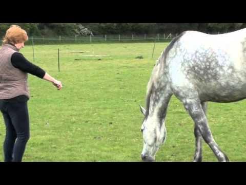 AEB Horsemans Handshake
