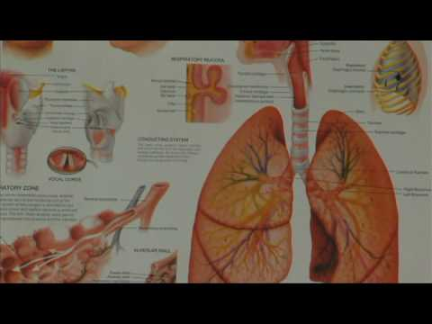 Asthma Symptoms & Treatments : Differences Between Asthma & Bronchiolitis in Children