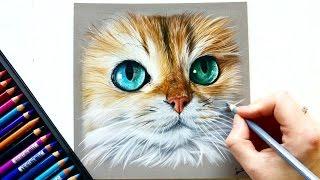 Drawing a photorealistic cat portrait with pastel pencils   Leontine van Vliet
