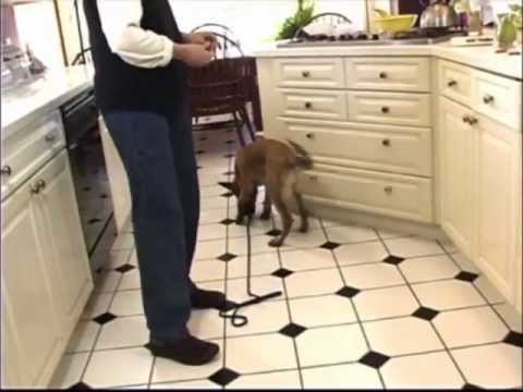 Using Food Rewards to Train Your Dog