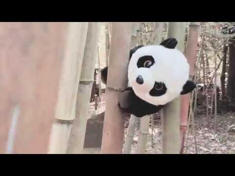 Kyoto & Nara - iPhone XS Max Cinematic Video 4K / DJI Osmo mobile