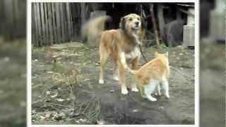 Прикол: кошка очень любит собаку - funny cat