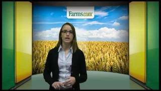Farms.com Market News Report USDA Grain Exports and Cattle On Feed