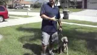 1. Service Dog Training (abuse) Day 1.flv