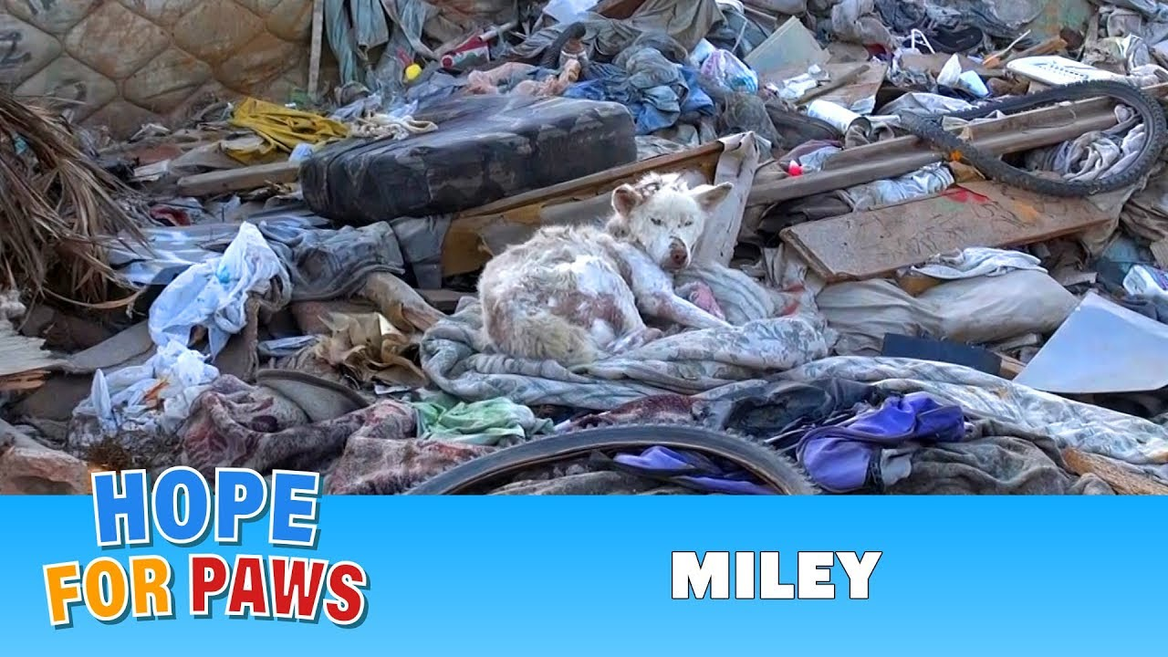 Sick Dog Rescued From Trash Pile
