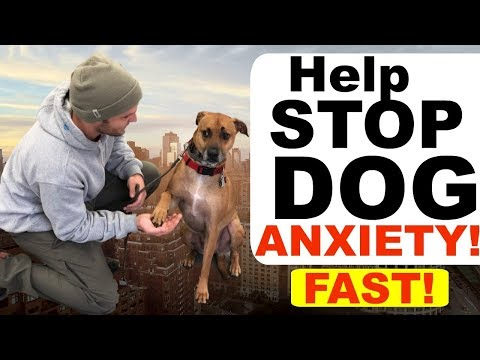 how-to-stop-dog-anxiety-fast--dog-anxiety-training|fearful-dog-training-tips!