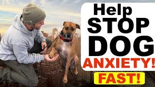 How to stop Dog Anxiety Fast Dog anxiety training|Fearful dog training tips!