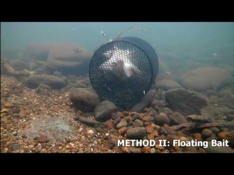 Best Way To Catch Crawfish - Crayfish
