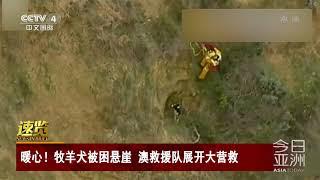 [今日亚洲]速览 暖心!牧羊犬被困悬崖 澳救援队展开大营救| CCTV中文国际