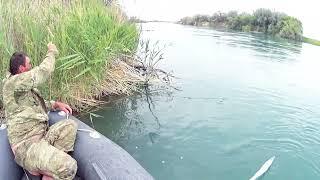 Рыбалка на реке Или 2021 Сбитые амуровки с утра и обрывы поводков