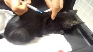 Сталинграда-чёрный котёнок-перелом челюсти.