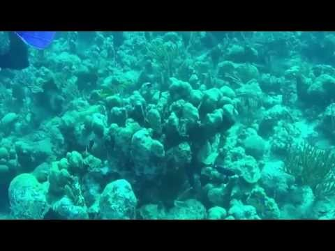 GoPro dive turks and caicos