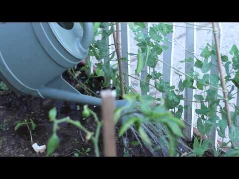How to Water a Raised Garden : Around the Garden