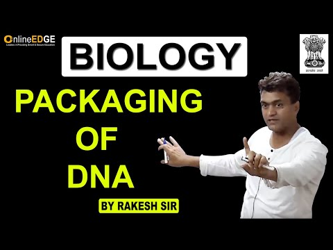 Packaging Of DNA - Class 12th Biology Chapter 6 - TrentEd