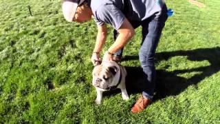 Уроки экшн-съемки: GoPro и животные