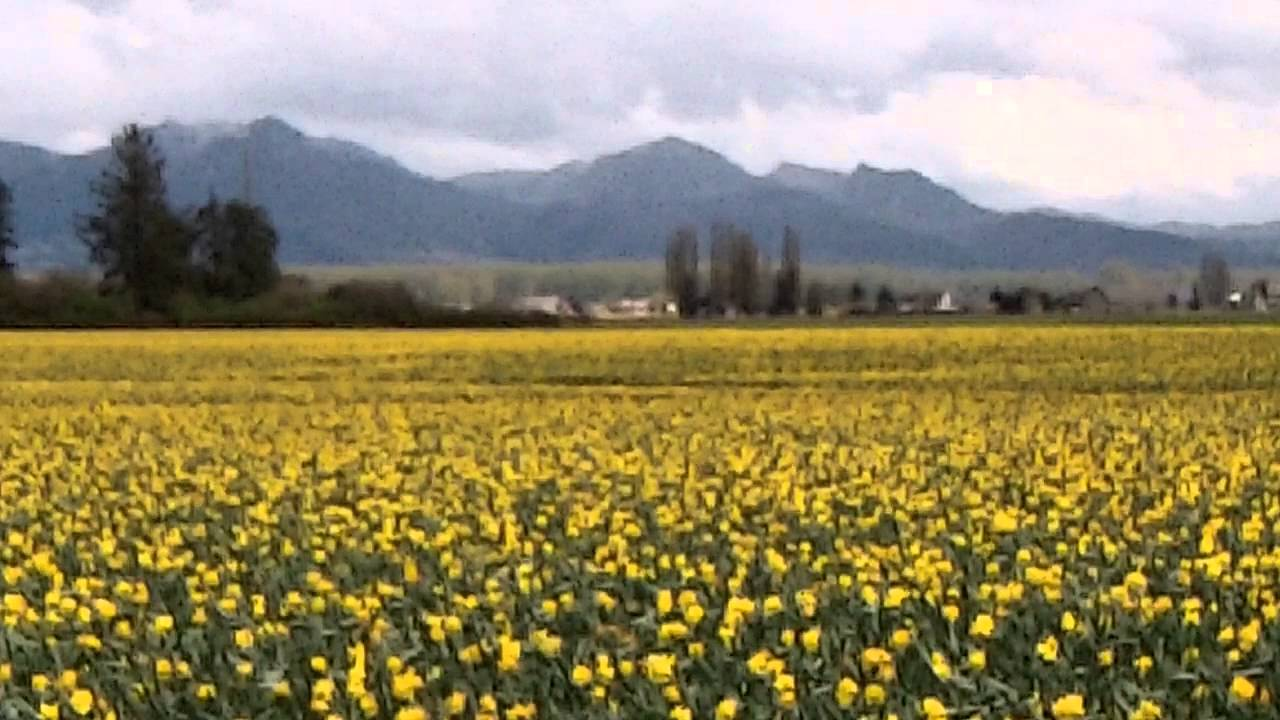 A Brief Analysis of 'Daffodils' by William Wordsworth