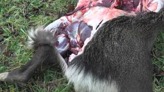 Repeat youtube video 牧草地におけるエゾシカ猟の実際のすべて