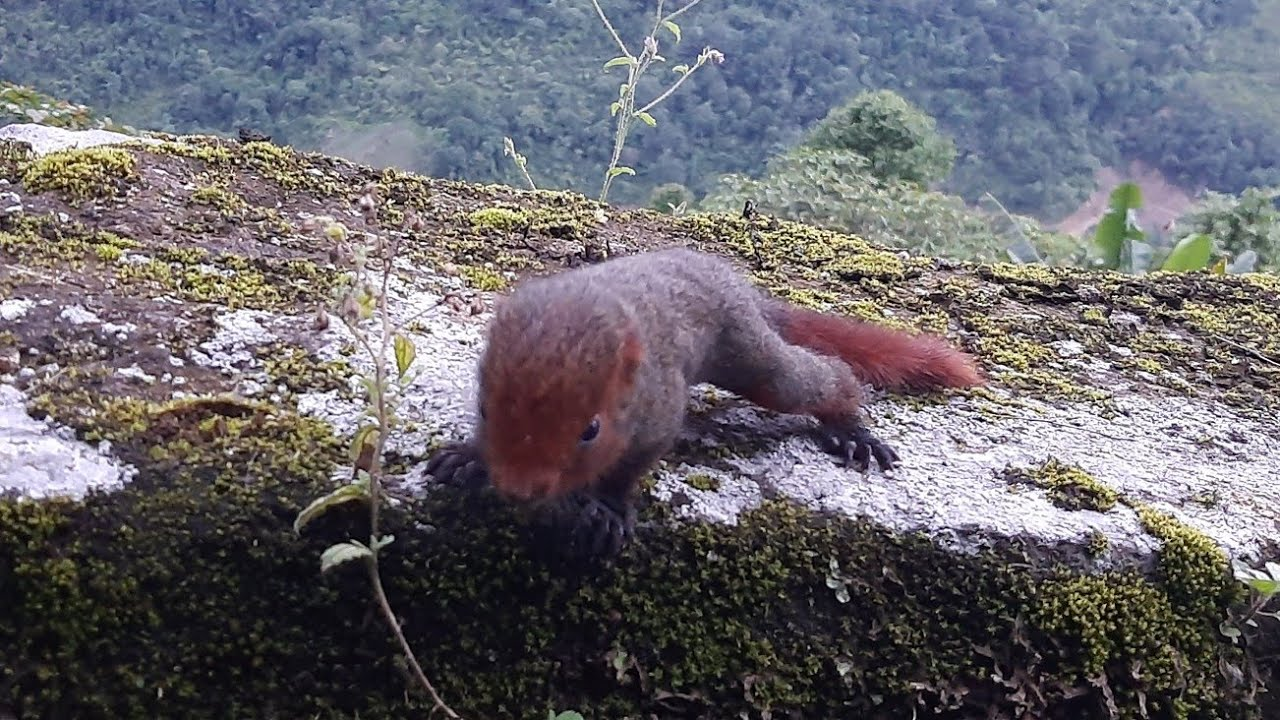 Encounter with a mountain squirrel baby    Early morning view of koloriang & kurung river, Arunachal