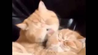От уж эта любовь. Страсть. Коты. Прикол