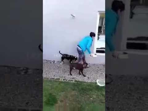 dog-trainning-session