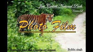Royal Bengal Tiger in Corbett national park || Photo film || Bijrani zone