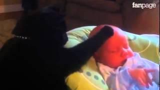 Un gattino fa addormentare un bimbo neonato!