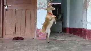 Animal dance on hindi song