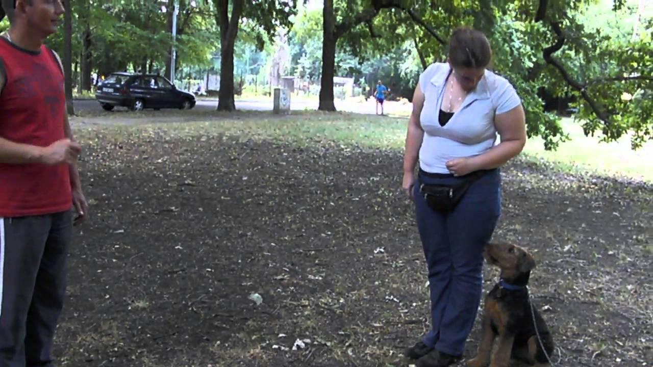 4 Honapos Airedale Terrier Kolyok Tanitasa Youtube