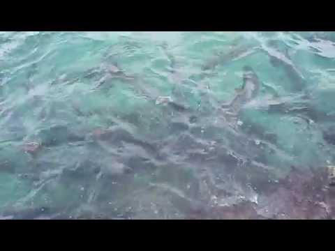 Grand Cayman Marine Park Georgetown Octubre 2014
