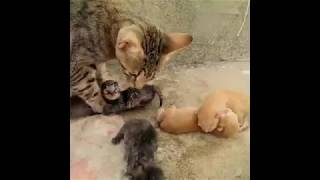 Baby Cats 🔴 Funny and Cute Baby Cat Videos Compilation (2018) 1