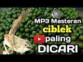 Masteran Ciblek Paling Dicari   Mp3 - Mp4 Download
