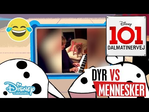 Dalmatinervej 101  Dyr vs Mennesker: Musik 🎶- Disney Channel Danmark
