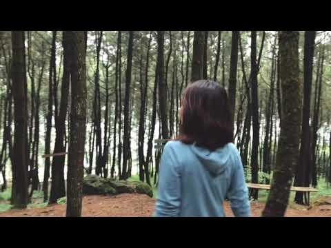 PINE FORESTS - CINEMATIC
