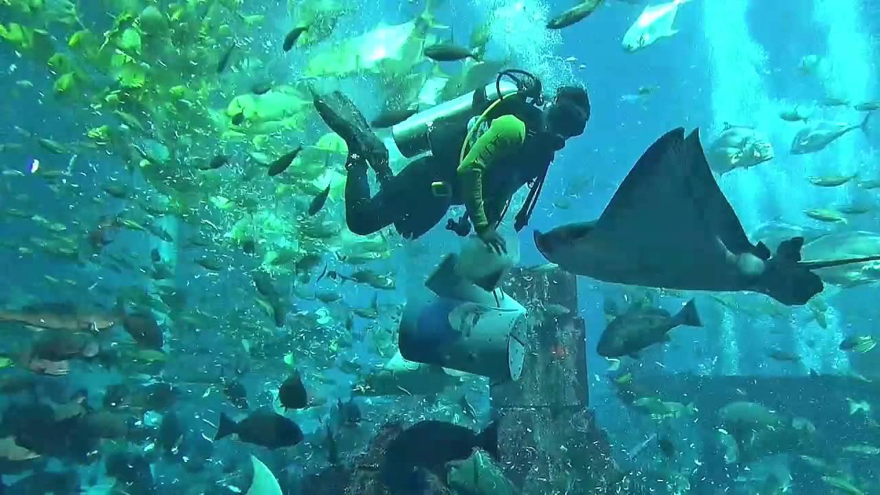 Atlantis The Palm The Lost Chambers Aquarium Dubai Youtube