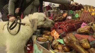 Meet Logan the Irish Wolfhound
