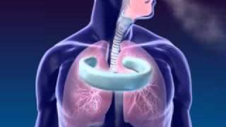 sistem pernapasan manusia 1