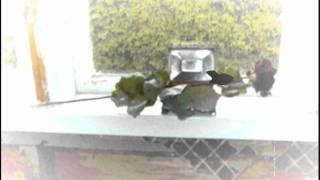 MIILUKORPI proudly presents Wäiski - Ruusuja hopeamaljassa