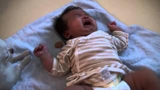 泣いている赤ちゃんにおやつをあげる犬 thumbnail