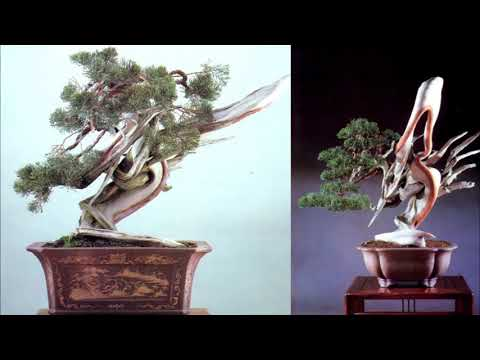 Bonsai before and after 2/Bonsai Master - Masahiko Kimura