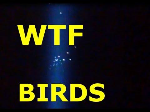 Migratory Birds Mesmerized By Luxor Light Las Vegas
