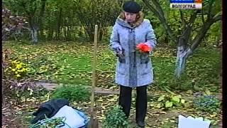 Укрытие роз. Как сохранить розы зимой. Укрывной материал.