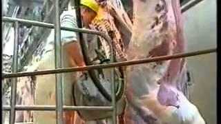 عملية ذبح وتقطيع اللحم في بلجيكا !!